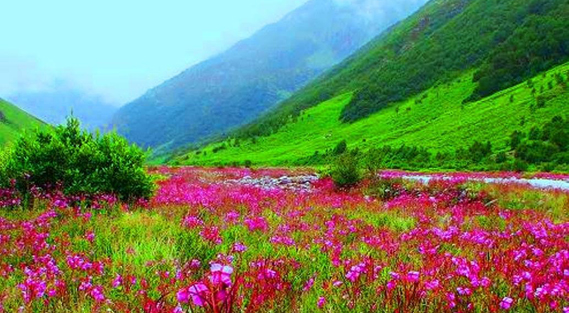 Best Places to visit in Valley of Flowers