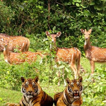 Delhi-to-Jim-Corbett-car-rental-tempo-traveller