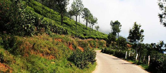 Bengaluru to Ooty Car Rental Services - Best Deal